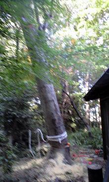 Forestwork070925_011