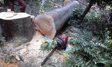 Forestwork070925_017
